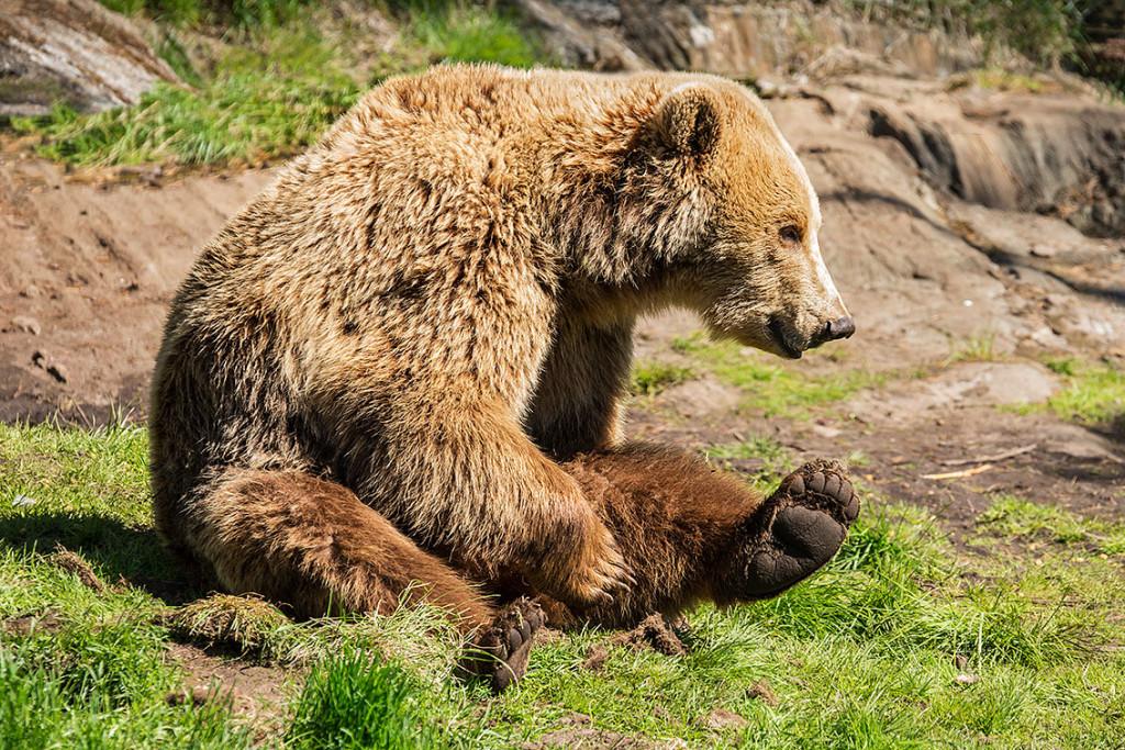 Auf den Spuren der Bären in Lierne