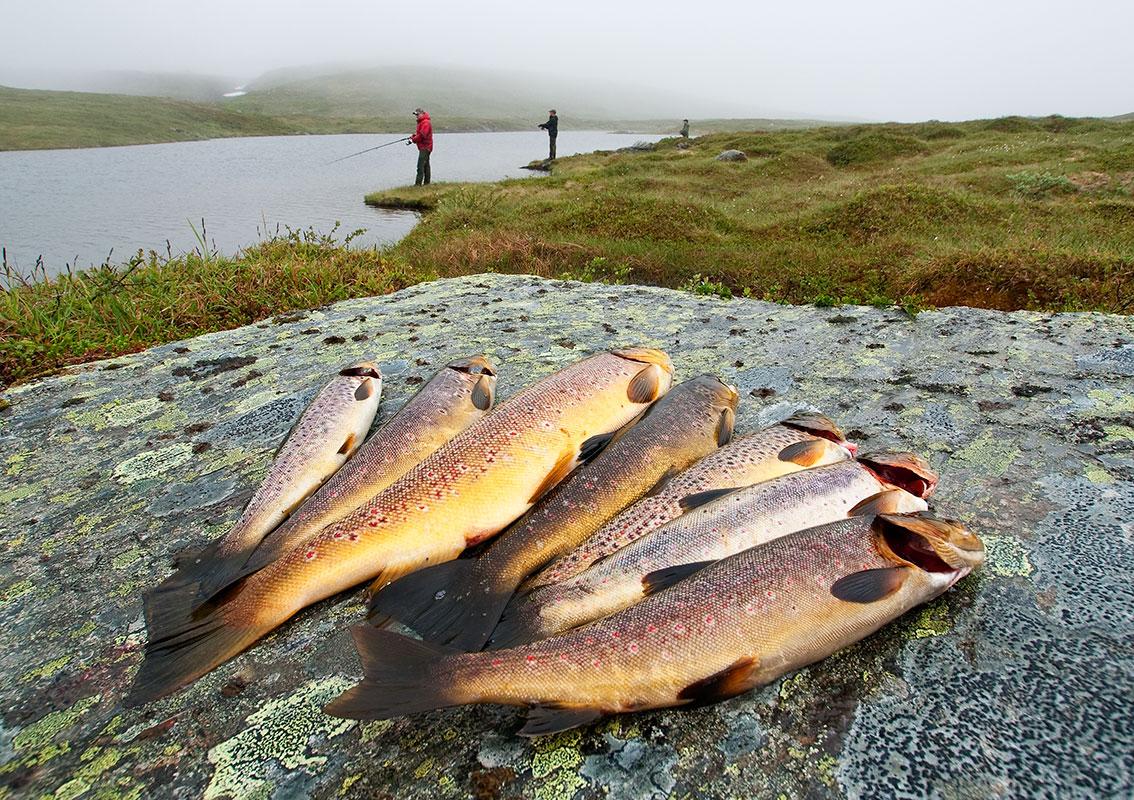 Bergangeln, Grong, Norwegen. Steinar Johansen.